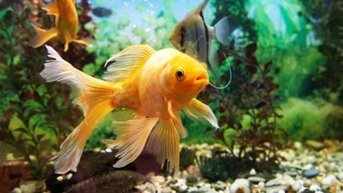como-cancelar-compra-no-peixe-urbano